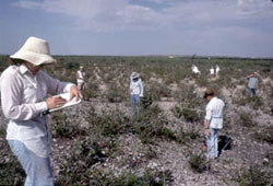 Students at Field School